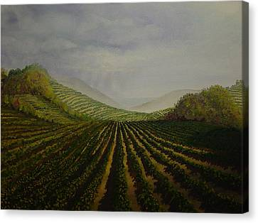 Beaujolais Canvas Print - Vineyard by Mark Golomb