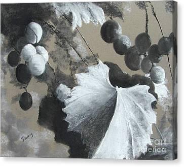 Vineyard Canvas Print by Mary Lynne Powers