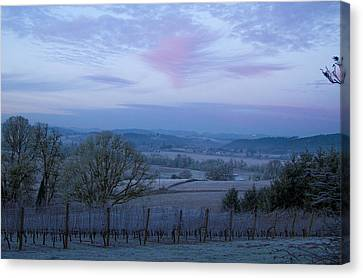 Vineyard Morning Light Canvas Print by Jean Noren