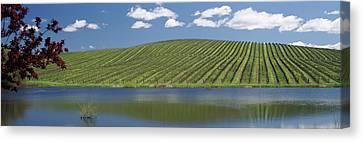 Vineyard In Napa Canvas Print - Vineyard Near A Lake, Napa County by Panoramic Images