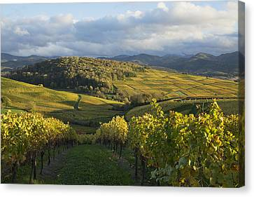 Vineyard Near Kirchhofen Markgraefler Canvas Print