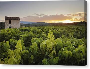 Vineyard Near Malemort-du-comtat Canvas Print by Andy Kerry