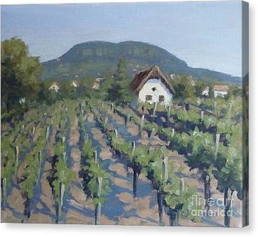 Vineyard Of Badacsony Canvas Print