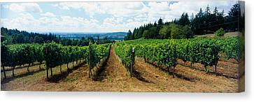 Winemaking Canvas Print - Vineyard On A Landscape, Adelsheim by Panoramic Images