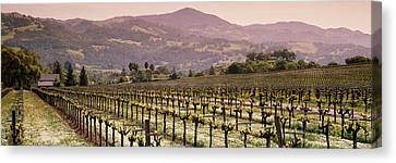 Vineyard On A Landscape, Asti Canvas Print by Panoramic Images