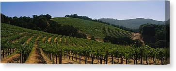 Vineyard On A Landscape, Napa Valley Canvas Print by Panoramic Images