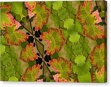 Vineyard Quilt Canvas Print