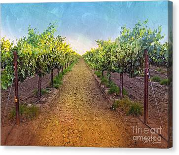 Vineyard Road Canvas Print by Shari Warren
