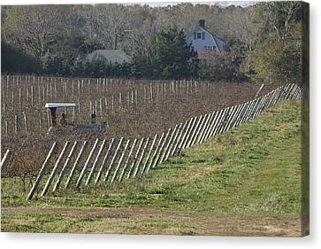 Vineyard Southold New York Canvas Print