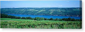 Keuka Lake Canvas Print - Vineyard With A Lake In The Background by Panoramic Images