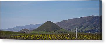 Vineyard With A Mountain Range Canvas Print by Panoramic Images