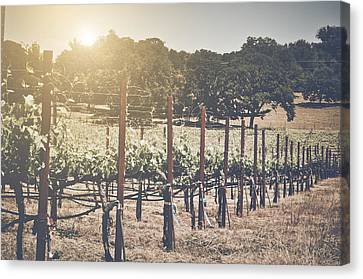 Vineyard With Blue Sky In Autumn With Vintage Instagram Film Sty Canvas Print