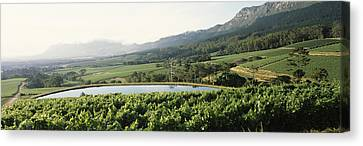 Winemaking Canvas Print - Vineyard With Constantiaberg Mountain by Panoramic Images