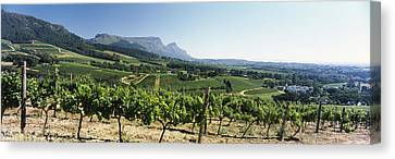 Vineyard With Constantiaberg Range Canvas Print by Panoramic Images