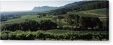 Vineyard With Mountains Canvas Print