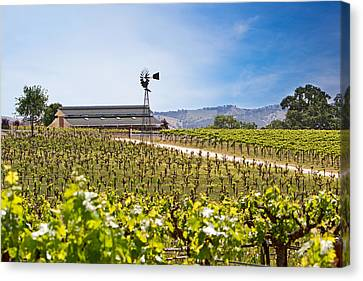 California Vineyard Canvas Print - Vineyard With Young Vines by Susan Schmitz