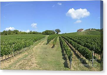 Vineyards And Hills In Chianti Canvas Print by Sami Sarkis