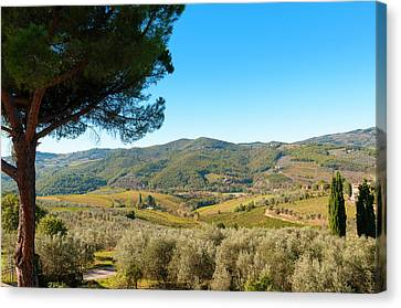 Vineyards And Olive Groves, Greve Canvas Print