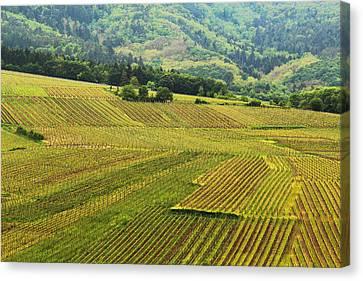 Vineyards Below Zellenberg France 1 Canvas Print by Greg Matchick