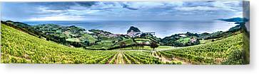 Vineyards By The Sea Canvas Print