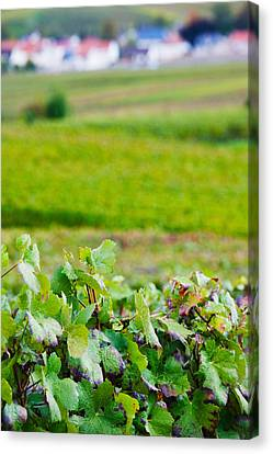 Vineyards In Autumn, Chigny-les-roses Canvas Print by Panoramic Images