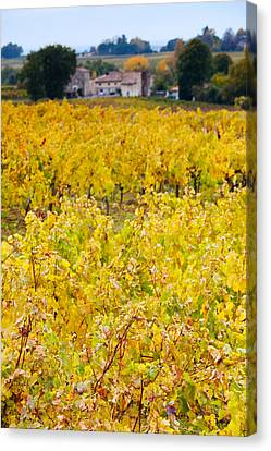 Winemaking Canvas Print - Vineyards In Autumn, Montagne, Gironde by Panoramic Images