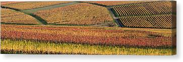 Wine Scene Canvas Print - Vineyards In Autumn Near Gleisweiler by Panoramic Images