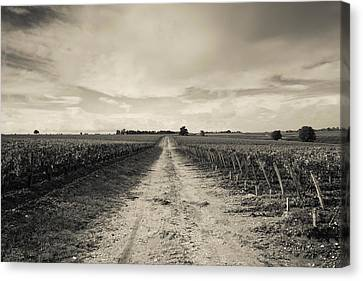 Vineyards In Autumn, Pauillac, Haut Canvas Print by Panoramic Images