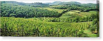 Vineyards In Chianti Region, Tuscany Canvas Print by Panoramic Images