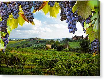 Grape Vines Canvas Print - Vineyards In San Gimignano Italy by Susan Schmitz