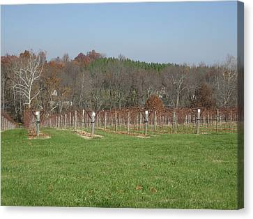 Vineyards In Va - 121228 Canvas Print by DC Photographer