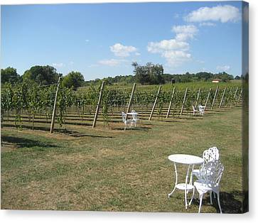 Vineyards In Va - 121240 Canvas Print by DC Photographer
