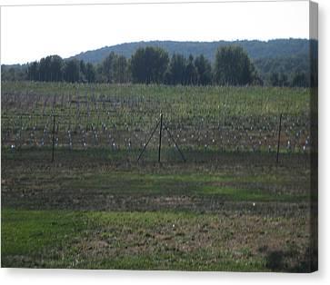Vineyards In Va - 121255 Canvas Print