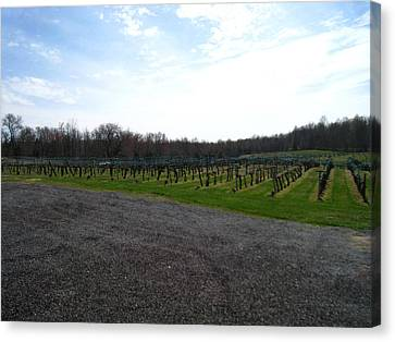 Vineyards In Va - 121267 Canvas Print by DC Photographer