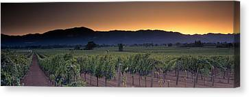 Winemaking Canvas Print - Vineyards On A Landscape, Napa Valley by Panoramic Images