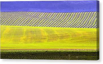 Vineyards Canvas Print by Rebecca Cozart