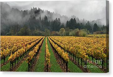 Vineyard Russian River Wine Country Sonoma County California Canvas Print