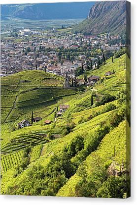 Viniculture Around Bozen (bolzano Canvas Print