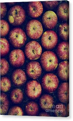 Vintage Apples Canvas Print by Tim Gainey