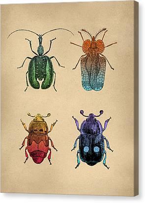 Vintage Beetles Tinted Engraving Canvas Print