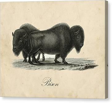 Vintage Bison Canvas Print