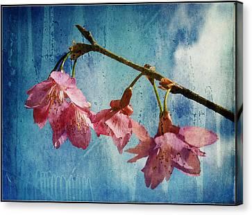Vintage Blossoms Canvas Print by Carla Parris