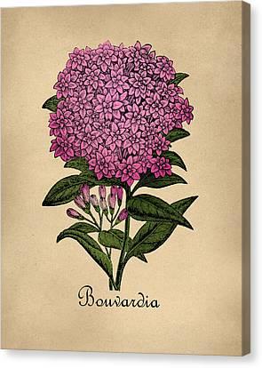 Vintage Bouvardia Botanical Canvas Print by Flo Karp