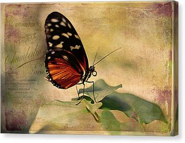 Vintage Butterfly Card Canvas Print