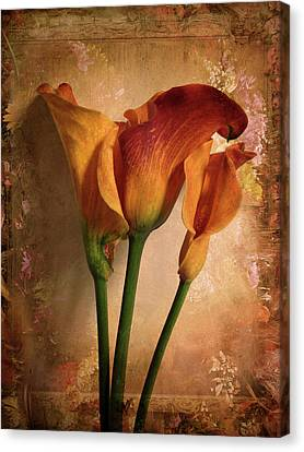 Canvas Print featuring the photograph Vintage Calla Lily by Jessica Jenney
