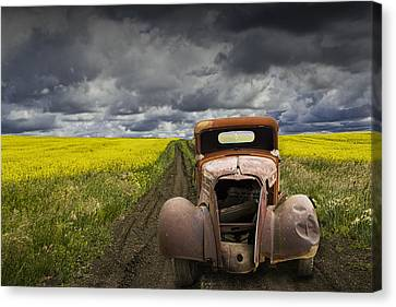 Vintage Chevy Pickup On A Dirt Path Through A Canola Field Canvas Print by Randall Nyhof