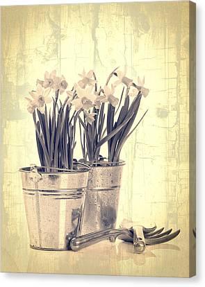 Vintage Daffodils Canvas Print by Amanda Elwell