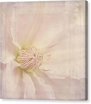 Vintage Flower Art - A Beautiful Place Canvas Print by Jordan Blackstone