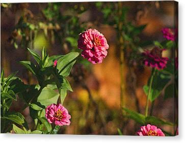 Vintage Flower Canvas Print by Rhonda Humphreys