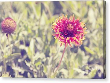 Canvas Print featuring the photograph Vintage Flowers by Mohamed Elkhamisy